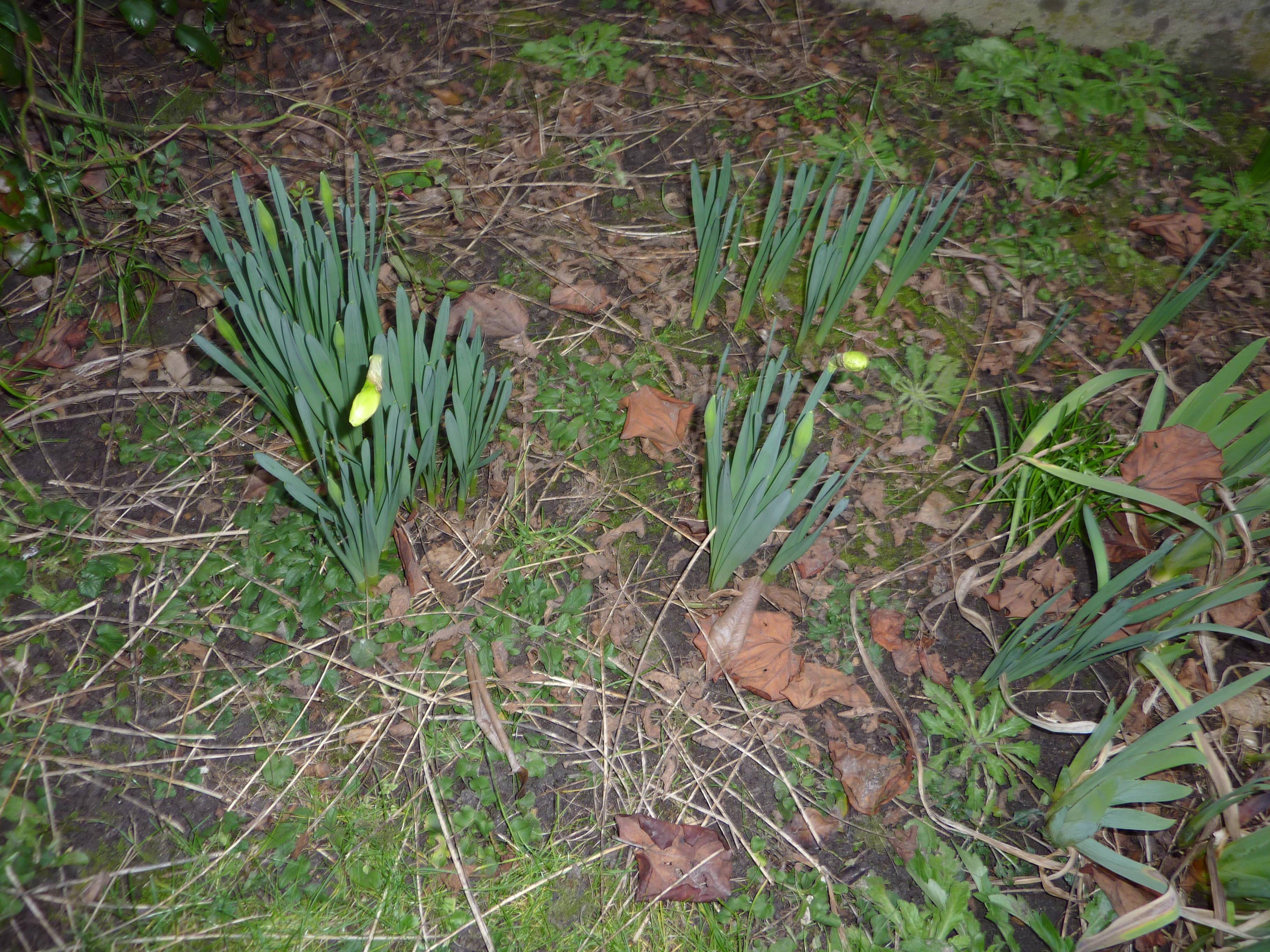 C est le printemps dans un jardin d aulnay sous bois ou - Petit jardin fruitier aulnay sous bois ...