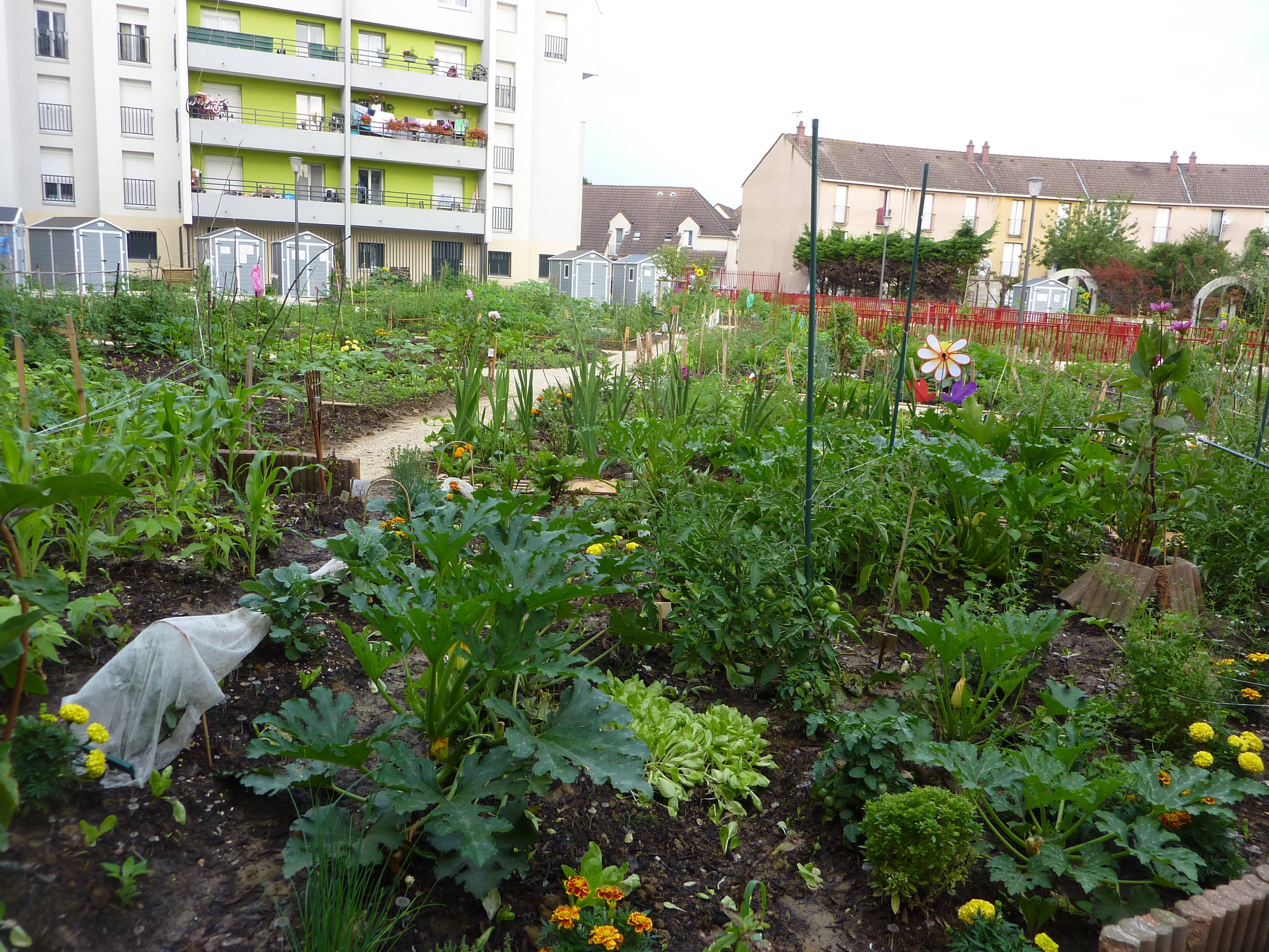 Aulnay sous bois les jardins partag s du gros saule - Mobilier jardin but aulnay sous bois ...