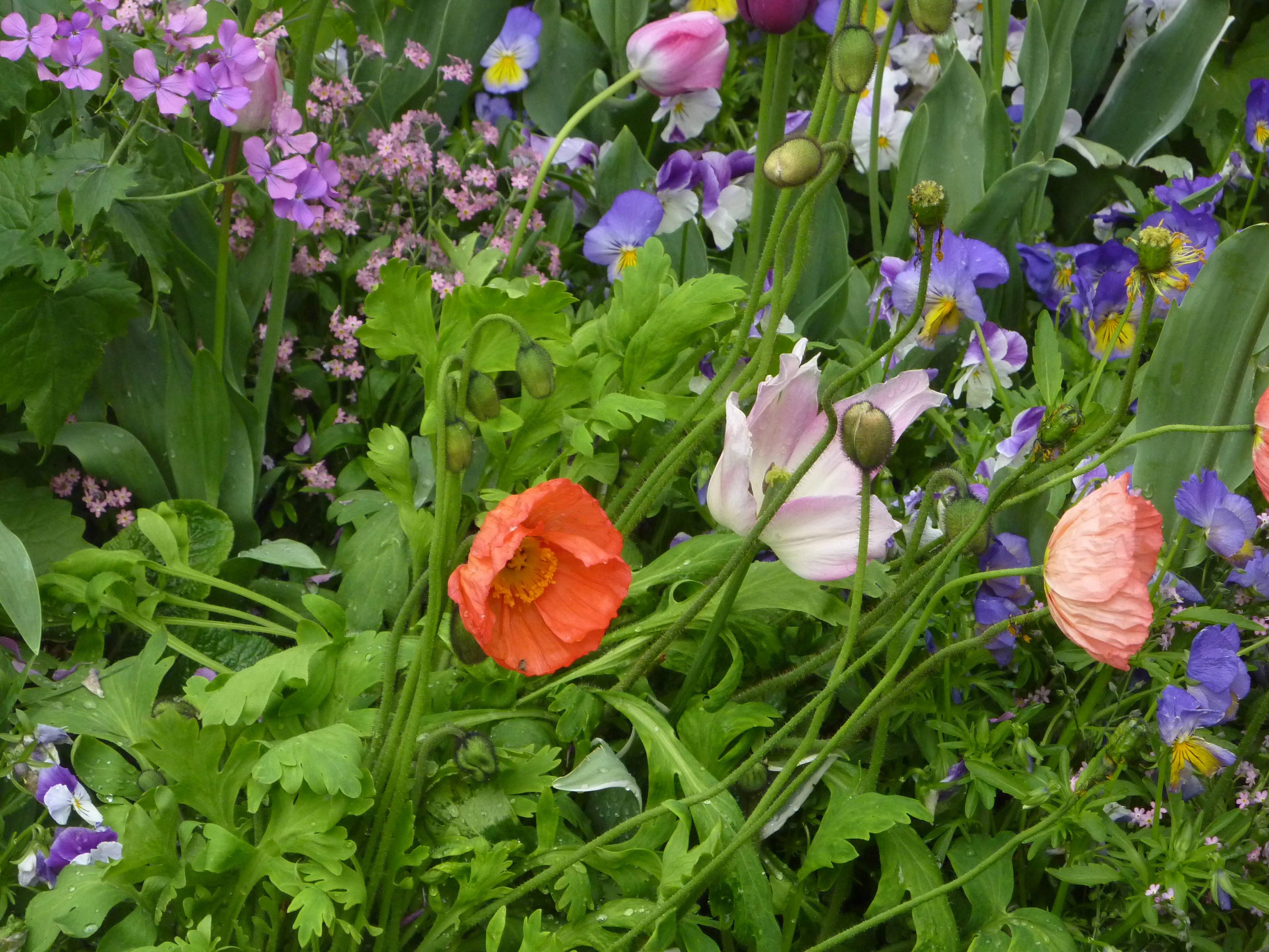 Le parterre fleuri des jardins de l h tel de ville d - Allee de jardin carrossable aulnay sous bois ...