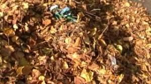 aulnay-feuilles.jpg