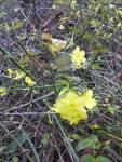 Fleur_Aulnay_2