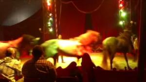 cirque_venise_animaux