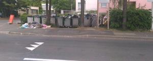 poubelles_gros_saule